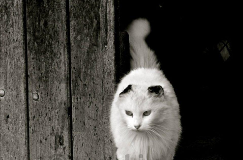 Cats I Gatos